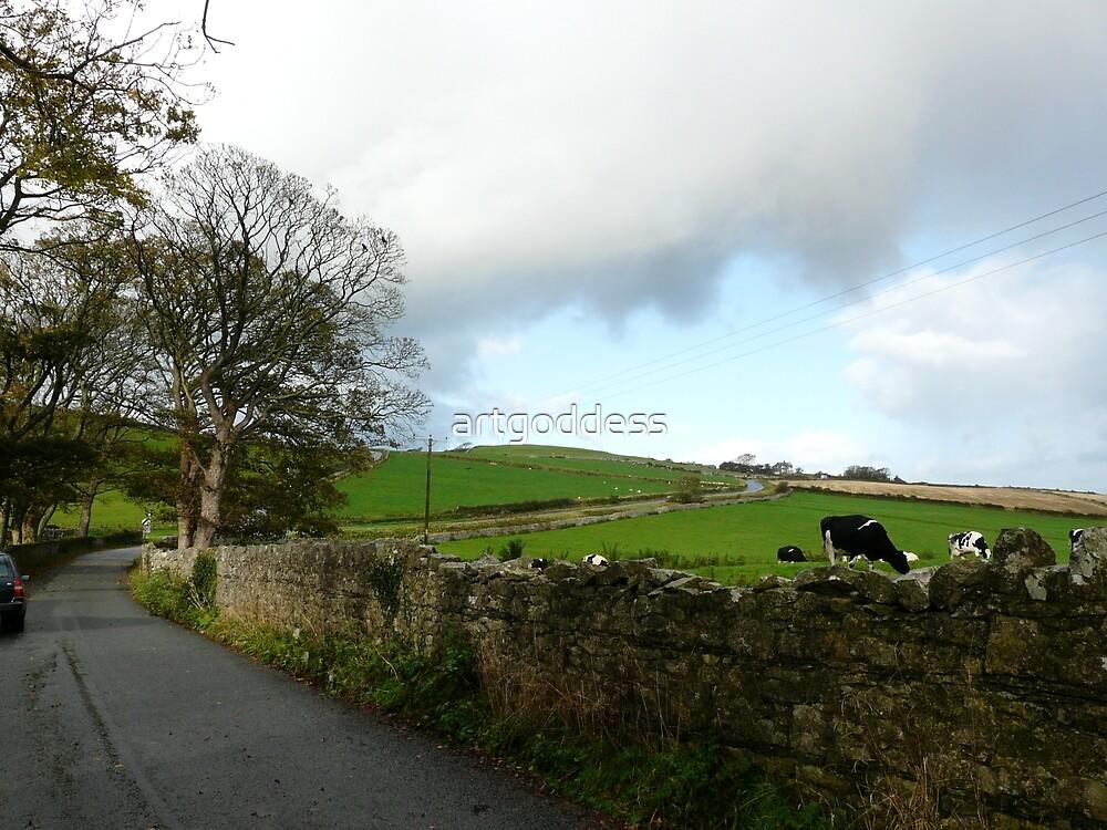 Cumbrian Cows by artgoddess