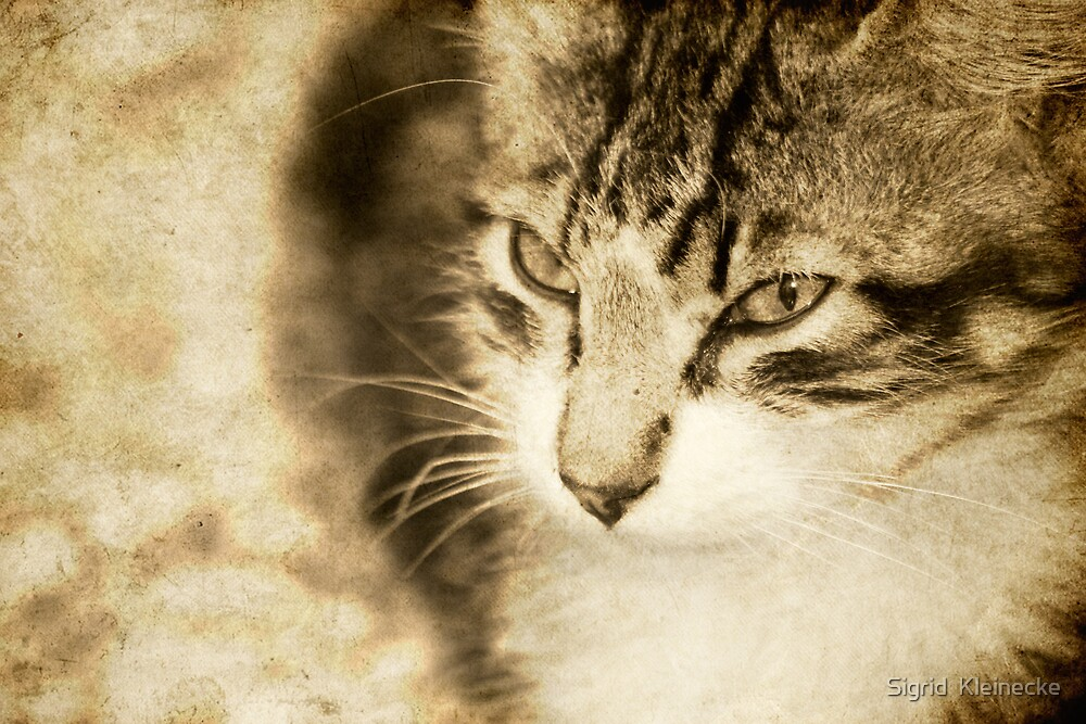 Misty eyes by Sigrid  Kleinecke
