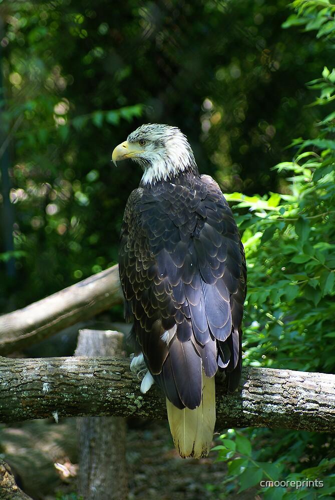 Bald Eagle by cmooreprints
