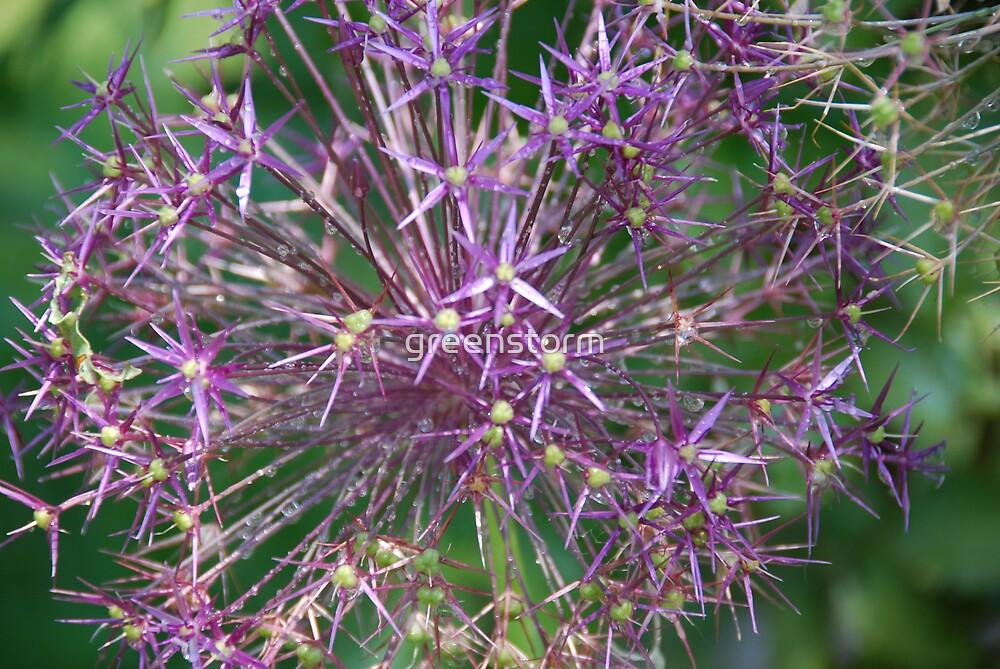 Purple Wonder I by greenstorm