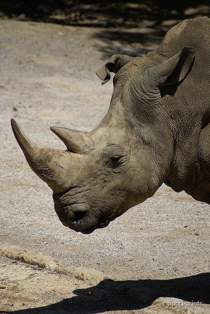 Rhino by cmooreprints