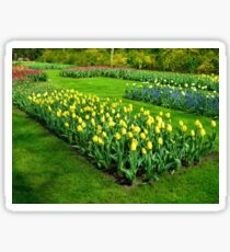 Bed of Yellow Tulips - Keukenhof Gardens Sticker