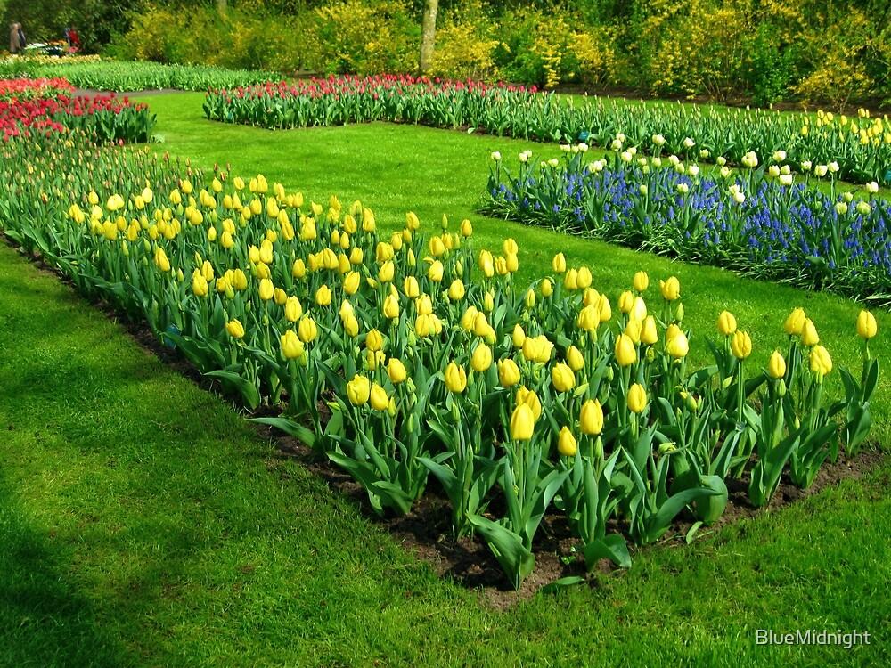 Bed of Yellow Tulips - Keukenhof Gardens by BlueMidnight