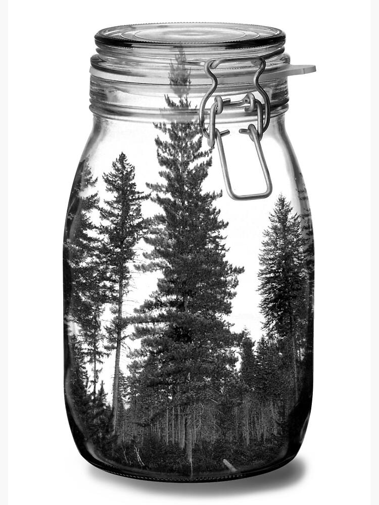 Kiefer Terrarium-Einmachglas von francotenorio