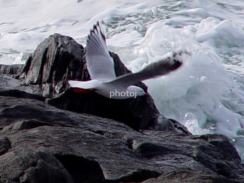 photoj 'Catching The Surf' by photoj