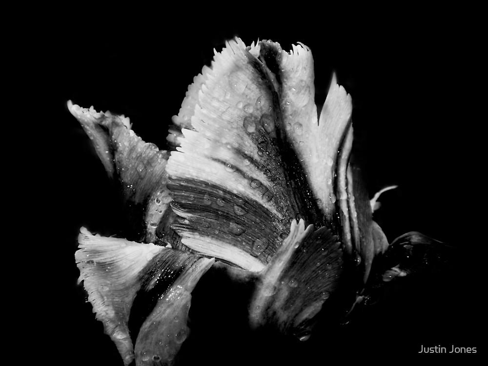 Tulip 2: Embrace by Justin Jones
