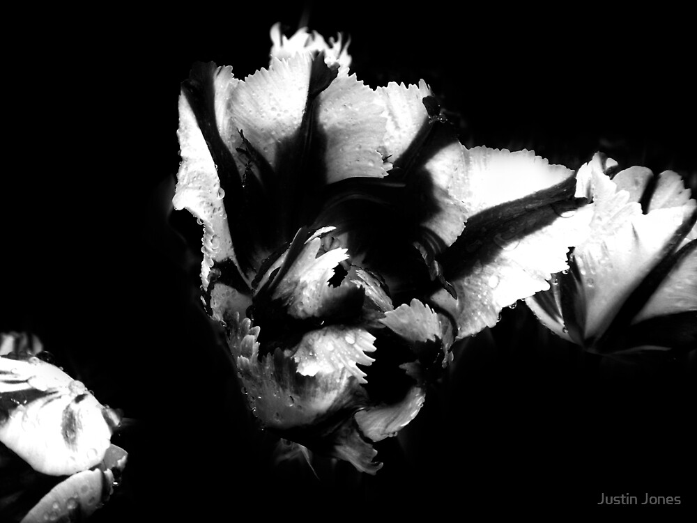 Tulip 4: Fugue by Justin Jones
