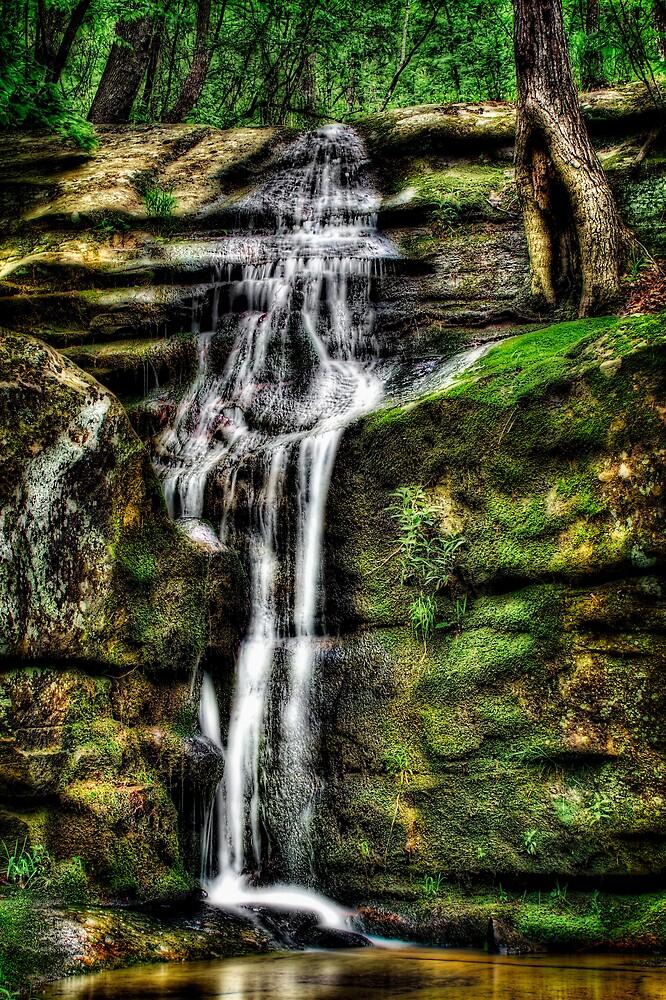 Hollow Tree Falls by Scott Ward