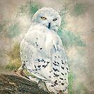 Snowy owl by Brian Tarr