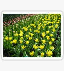 Golden Tulips - Keukenhof Gardens Sticker