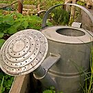 watering can by Northcote Community  Gardens