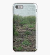 A few kangaroos iPhone Case/Skin