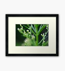 Macro photography Framed Print