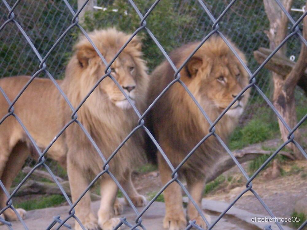 Caged Lion #3 by elizabethrose05