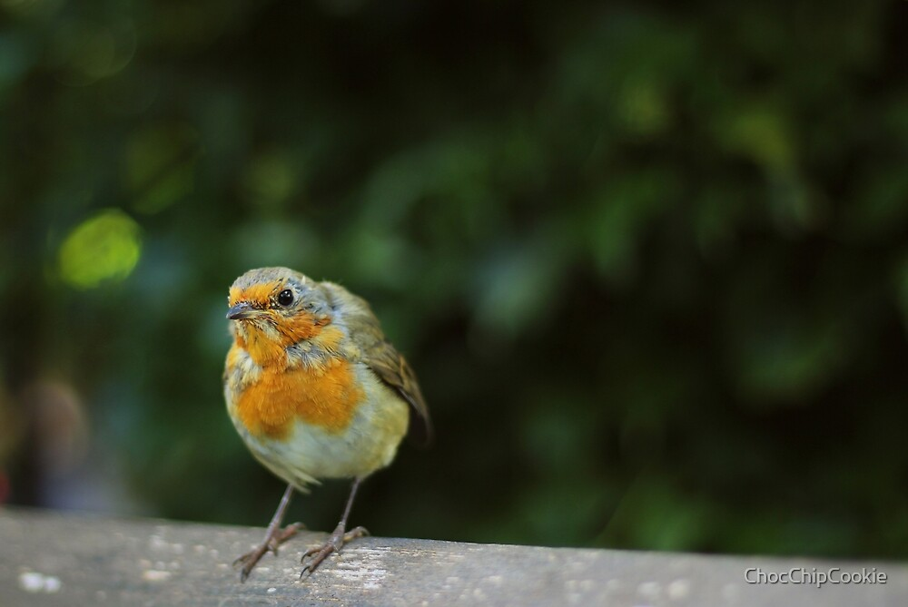 Robin by ChocChipCookie