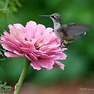 Humming bird Flower by Jerry  Mumma