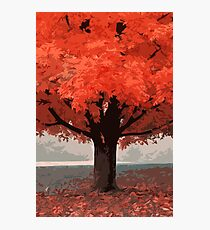 In a beautiful autumn morning Photographic Print