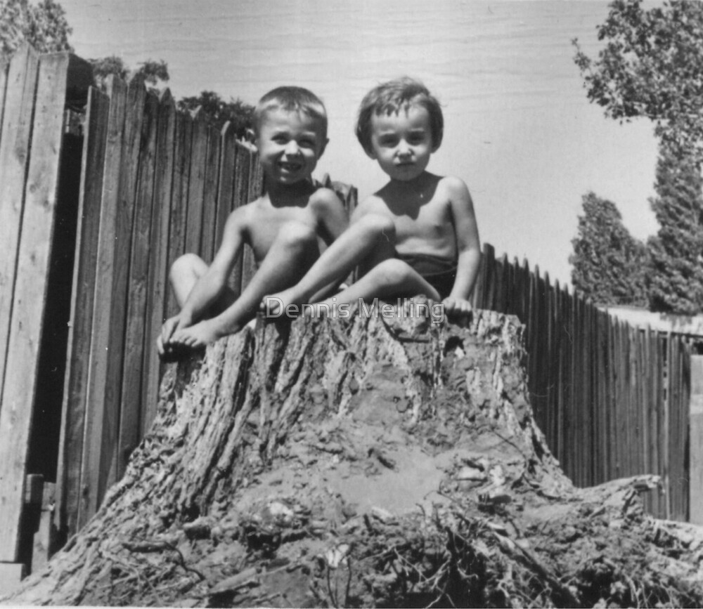 Siblings Sprouting from an Old Tree in Romania 1956 by Dennis Melling