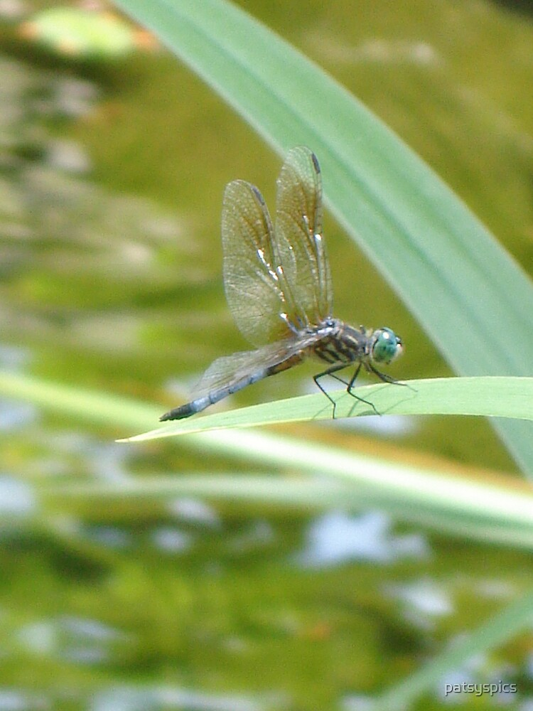 dragonfly by patsyspics