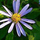 Beauty.... by solareclips~Julie  Alexander