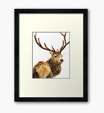 Winter Red Deer Framed Print