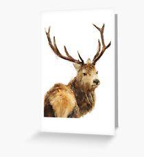 Winter Red Deer Greeting Card
