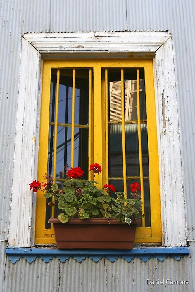 Potplant window by Daniel Campos