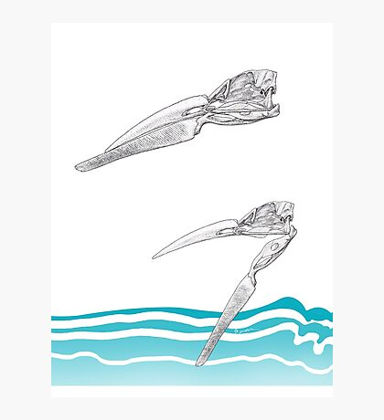 The Skimmer Photographic Print