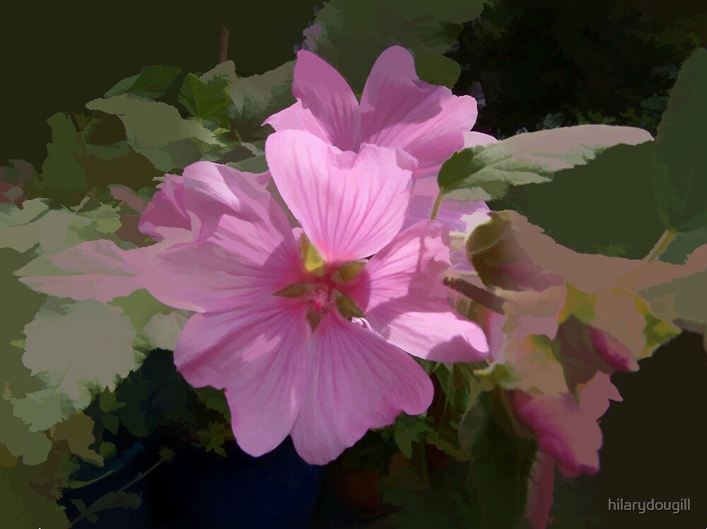 abstract of Lavatera by hilarydougill