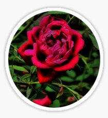 The Rose Sticker