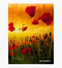 Poppy Sunset (4008 views as of 101618) Photographic Print