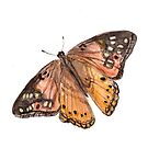 Orange and Brown Butterfly Art, Nature Art, Birds and Berry Studio by birdsandberry