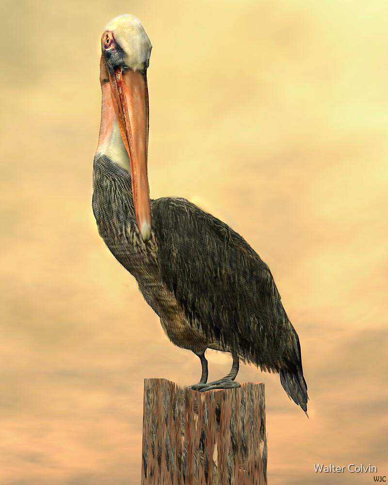 Pelican by Walter Colvin