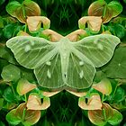 Green Glow Butterfly by MarCanton