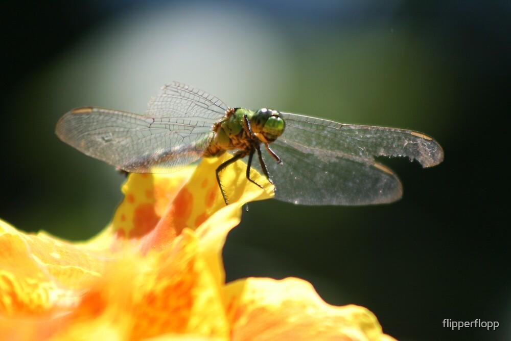 broken wings ll by flipperflopp