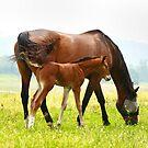 Charlotte Mom And Baby by Deborah  Benoit
