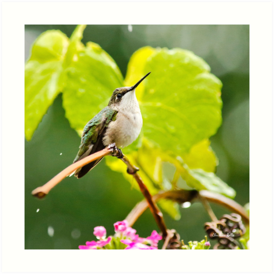 Hummingbird on Vine Square by Christina Rollo