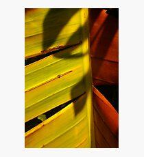 Torn Shadow Photographic Print