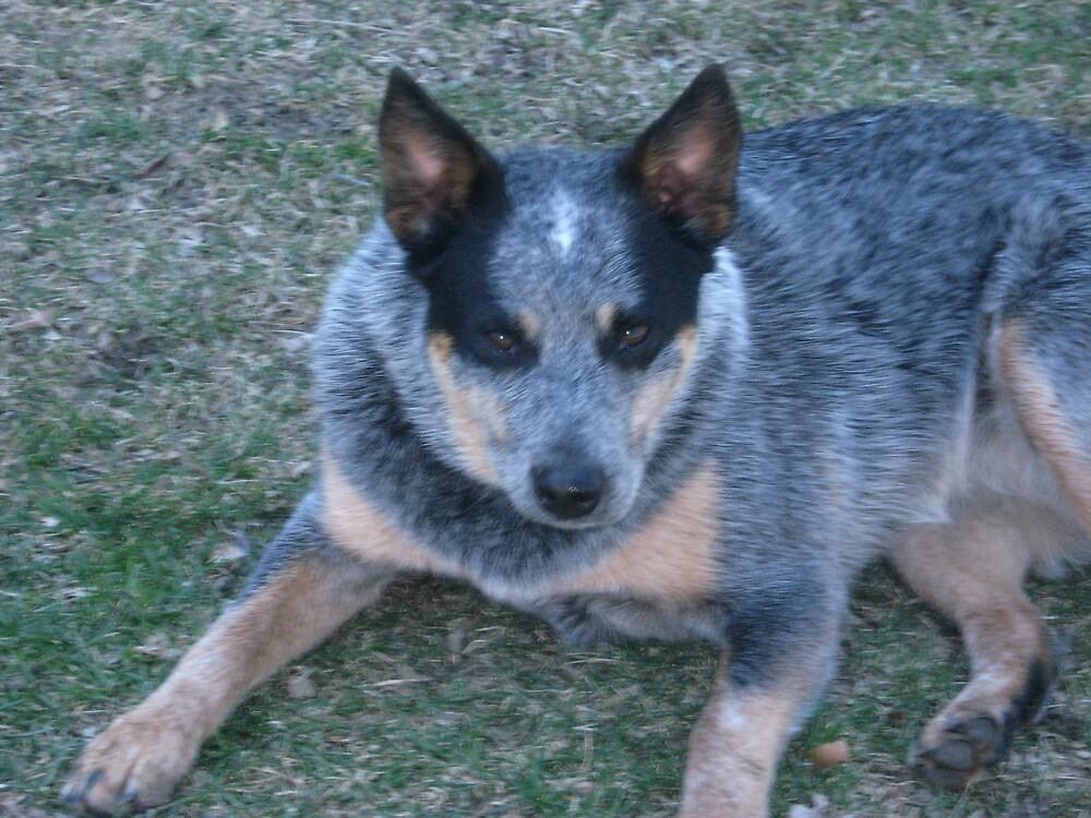 My Dog Kea by bljaromin
