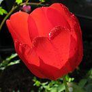 Tulip Heart...original by Danielle Loscig