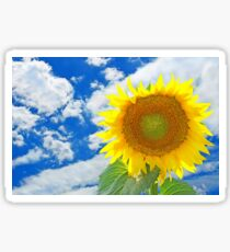 Sunflower against of blue sky and white clouds. Sticker