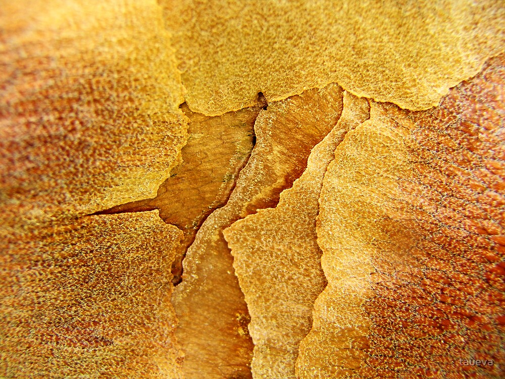 Fault Lines by taueva