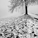 One Tree in B&W by Imi Koetz