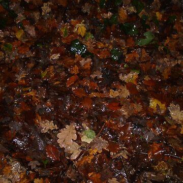 Autumn woodland floor by MadeInStreet