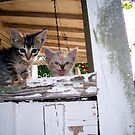 intruder alert by Sandra Hopko
