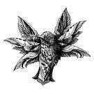 «Hummingbird v2» de BioWorkZ