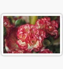 Carnation Sticker