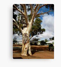 The Coolamon Tree - near Moora, Western Australia, 2010 Canvas Print