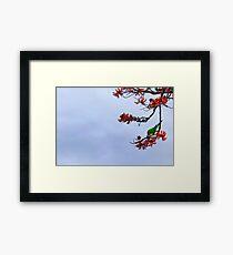 Parakeet's Paradise Framed Print