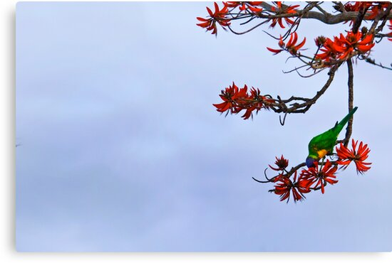 Parakeet's Paradise by Keegan Wong